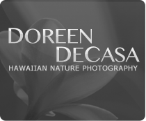 Doreen DeCasa - Photography
